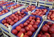 Iran okaże się największym eksporterem jabłek na świecie?