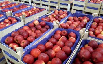 jabłka w wytłoczce