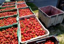 minimalne ceny owoców