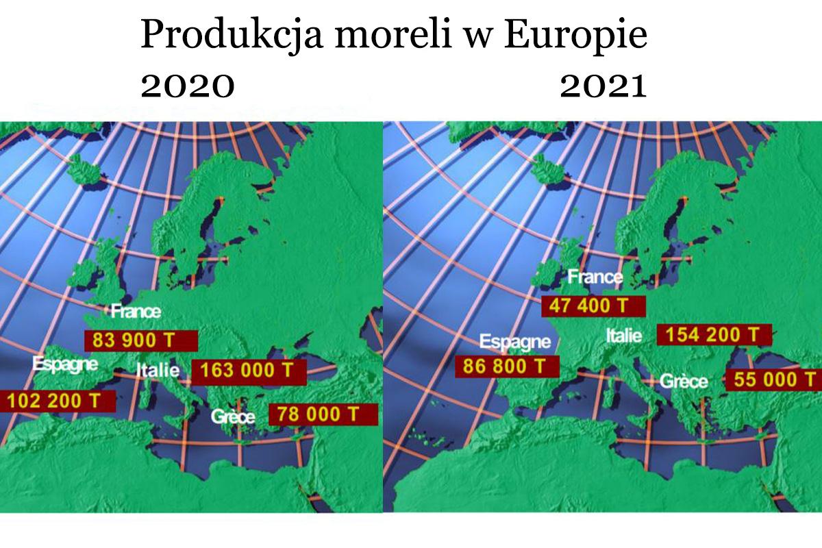 produkcja moreli 2021