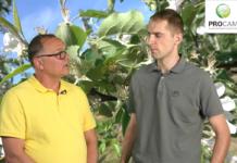 Komunikat sadowniczy PROCAM Inteligentne przerzedzanie MaxCel