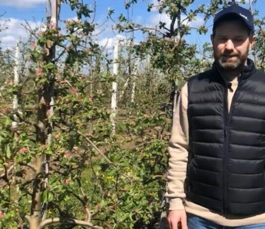 Parch jabłoni i mszyce – ochrona po weekendzie majowym – komunikat sadowniczy Bayer 06.05.2021