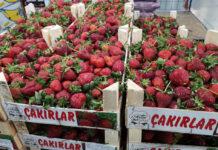 Węgrzy skutecznie chronią swój rynek przed importowanymi truskawkami