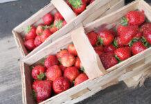 Producencie, czy sprzedajesz truskawki poniżej kosztów produkcji?
