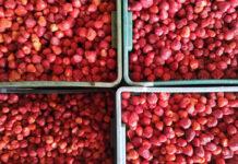 Ceny truskawek przemysłowych na eksport