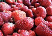 Ceny truskawek na skupach powoli rosną