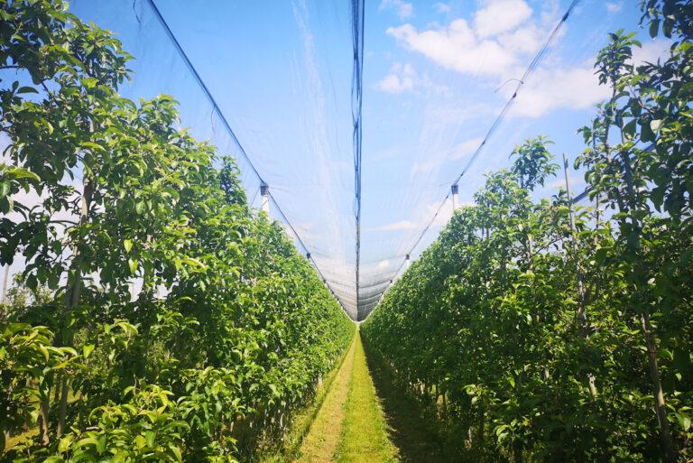 Niedotowane rolnictwo po raz kolejny wygrywa?