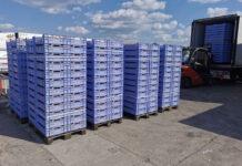 Skup truskawek przemysłowych 2021– relacja z targowiska w Nowym Przybojewie