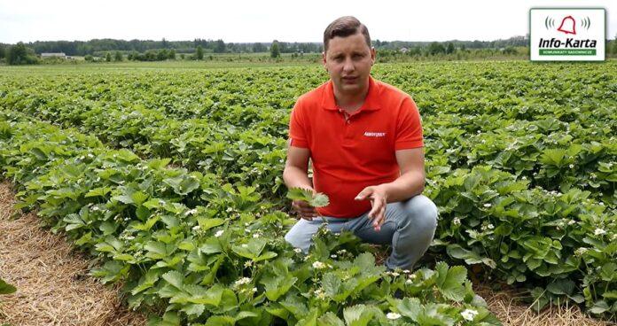 Tomasz Domański Agrosimex - komunikat jagodowy 02.06.2021