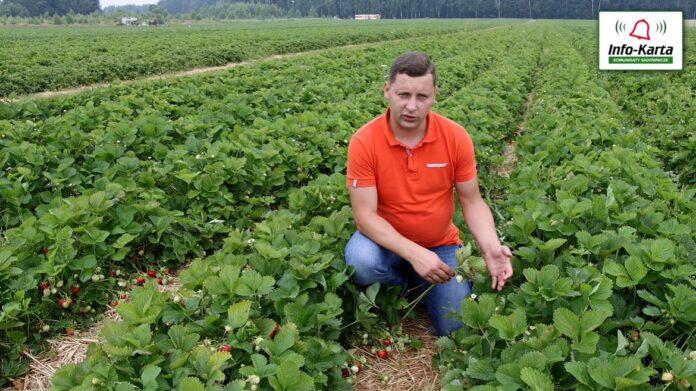 Tomasz Domański Agrosimex - 23.06.2021 - komunikat jagodowy