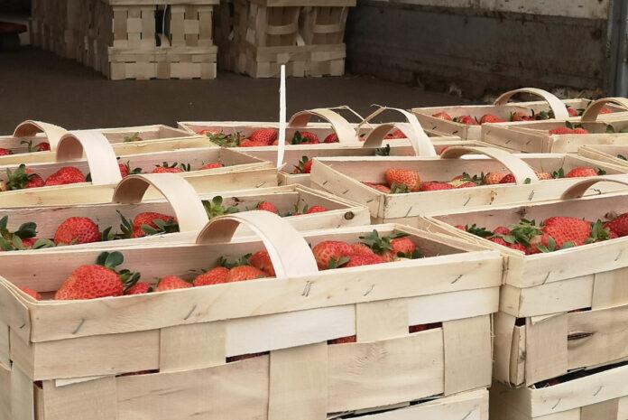 truskawki w łubiankach