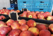 jabłka w kartonach