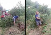 karczowanie sadu