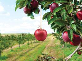 stop drop fruit