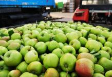 Mołdawia: więcej parcha to więcej jabłek przemysłowych