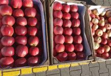 jabłka Bronisze