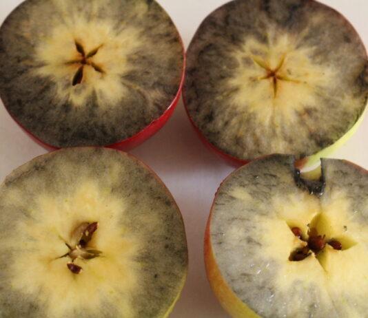 Zbiory jabłek 2021 – spotkanie on-line, zapis webinarium 19.09.2021