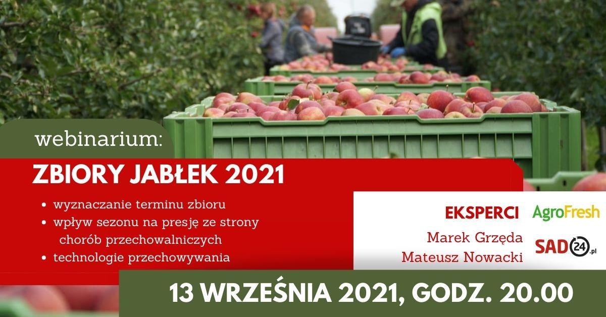 zbiory jabłęk 2021
