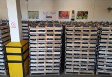 Importerzy sprowadzili z Mołdawii ponad 3000 ton śliwek