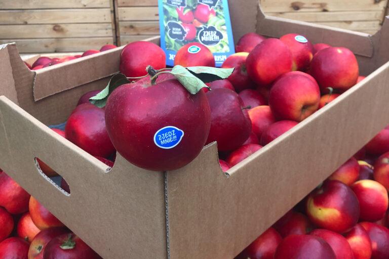 Polskie jabłka Crimson Crisp w marketach – należy się pochwała