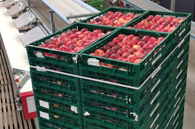 Sadownicy z południowej półkuli mają poważne problemy z wysyłką jabłek