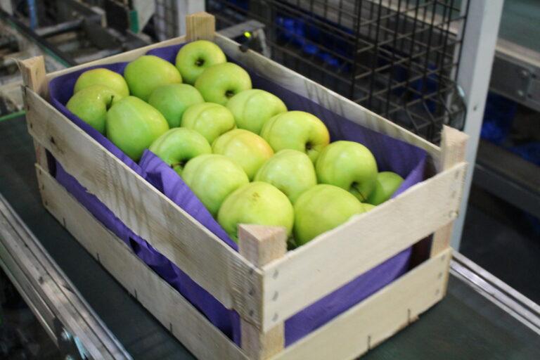 Eksport jabłek wcale nie stoi?