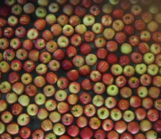 Ceny jabłek w grupach producenckich, 21 października 2021