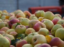 jablka przemyslowe
