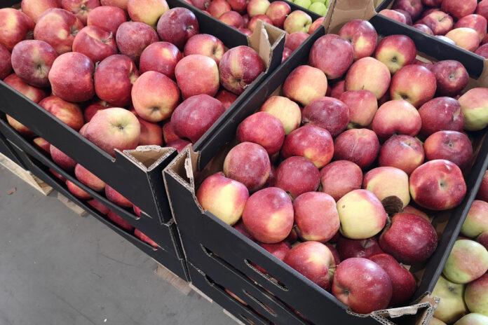 jablka w hurcie