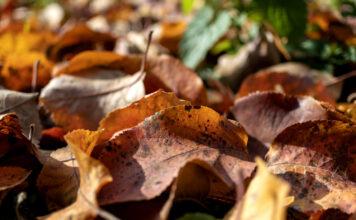 jesień w sadzie