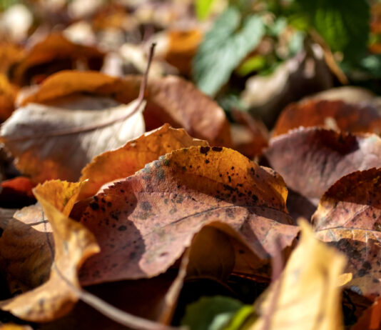 Pożyteczne bakterie w jesiennym sadzie