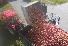 Spadek cen jabłek przemysłowych i dalsze problemy ze zbytem